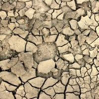 Meditations Monday: The Year of Drought