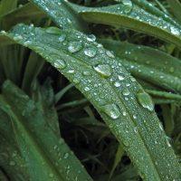 Thankful Thursday: God Will Send the Rain